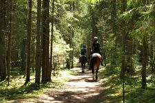 Riding trail in the forest