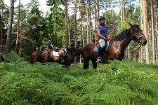 Riders in the ferns