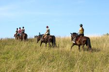 Riders in meadow